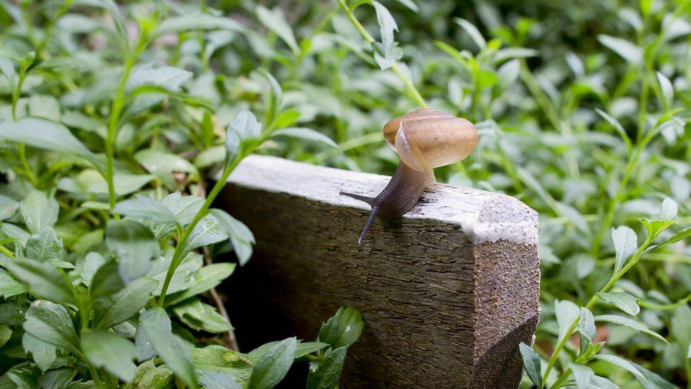 Schneckenzäune werden aus Beton, Kunststoff oder Stahlblech gebaut. (Bild: Destinyweddingstudio/Shutterstock.com)