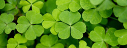 Klee-FocalPoint-Shutterstock.com