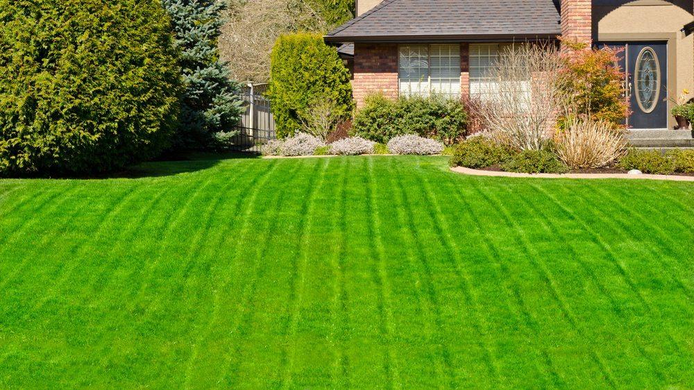 Der Rasenroboter erzeugt durch seine vorbildlichen Kurzschnitte dichte englische Grasflächen. (Bild: Karamysh/Shutterstock.com)