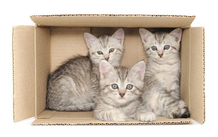 Die Haustiere sollte man neben dem Zügle nicht vergessen. (Bild: © Anatolii - fotolia.com)