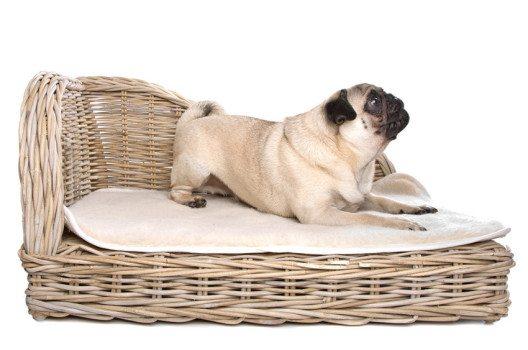 Auch Hunde freuen sich über einen festen eigenen Schlafplatz. (Bild: Erik Lam / Shutterstock.com)