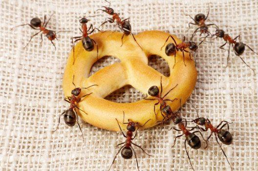 Ameisen – die lästigen Gäste im Haus. (Bild: Andrey Pavlov – shutterstock.com)