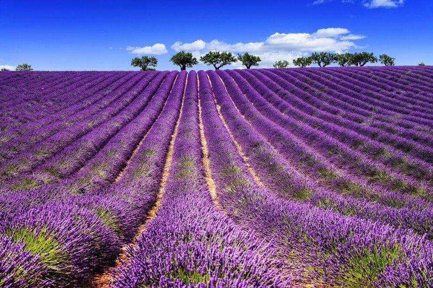 Südfrankreich und die Mittelmeerländer gelten als Heimat des Lavendels. (Bild: © beatrice prève - fotolia.com)