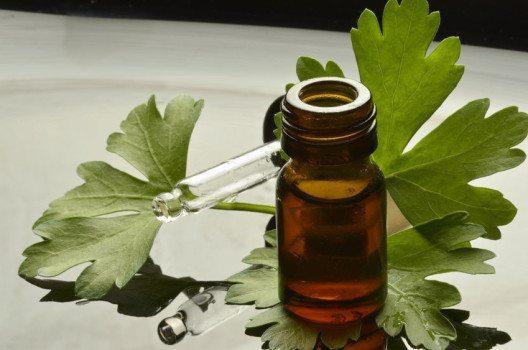 Das ätherische Öl der Petersilie wird durch Wasserdestillation gewonnen. (Bild: Comugnero Silvana – fotolia.com)