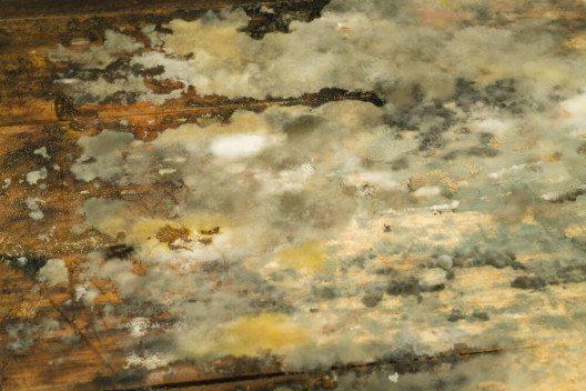 Schimmelpilze sind Mikroorganismen, die sich durch Sporen vermehren. (Bild: © AsherStock - shutterstock.com)