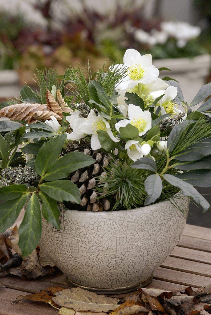 Auch kleine Pflanzen blühen sehr willig. (Bild: © Picturegarden | Rohner)