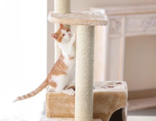 Die Katze mit einem Kratzbaum glücklich machen (Bild: Africa Studio - shutterstock.com)