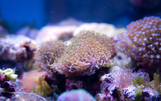 Buntes Meerwasseraquarium (Bild: © Legat33 - shutterstock.com)