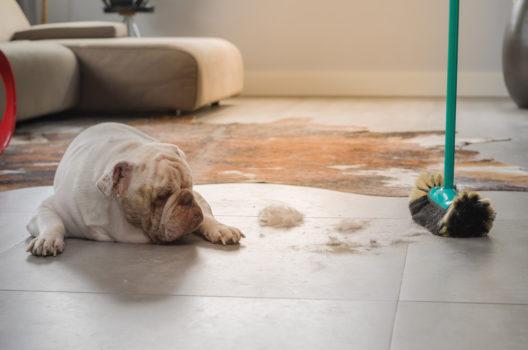 feature post image for Tierhaare entfernen - Jeder Hund- und Katzenhalter kennt es