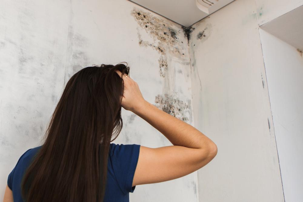 Schimmel mit richtigem Lüften vermeiden (Bild: Burdun Iliya - shutterstock.com)